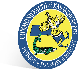 Massachusetts Shield