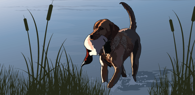 Retrieving a game bird