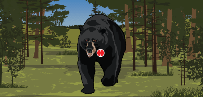 Bear up-front