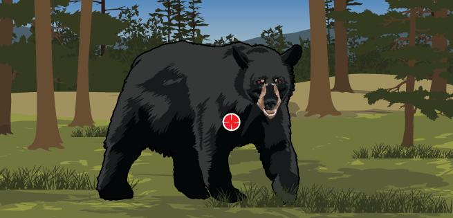 Bear Quartering Toward