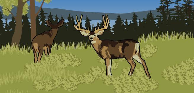 Food - Deer