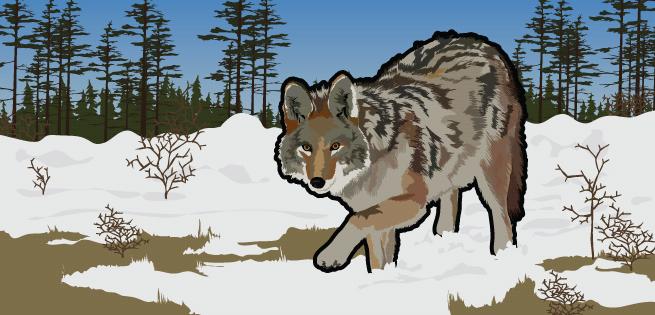 Nature's Hunters