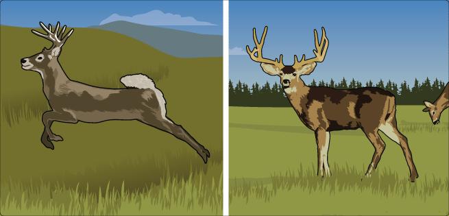 WT/Mule Deer